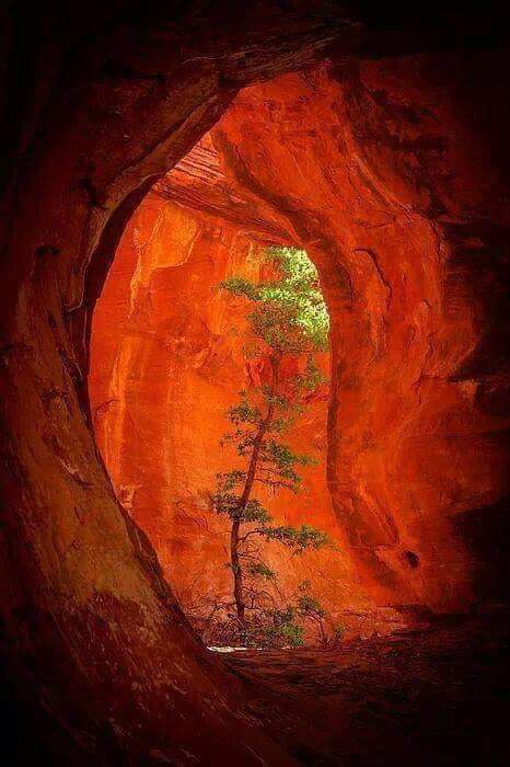 arbre et grotte rouge